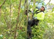 Best tree care service in san francisco - arborist