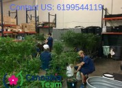 New opening - bud trimmer jobs in california