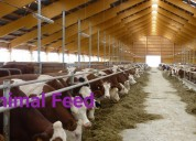 Boer goats and ox gallstones for sale(worldwide)