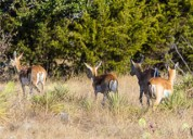 Hunting ranch for sale in texas