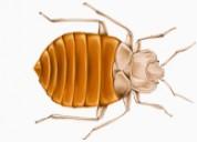 Pest control pennsylvania,termite control