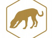 Afb detector dogs explained