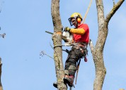 Tree trimming service anaheim ca