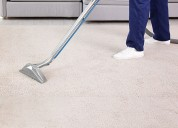 Professional carpet cleaning services in tampa flo