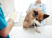 Veterinary software managment