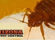 Tucson scorpion exterminator, wasp control arizona