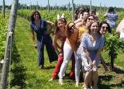 Long island vineyard transportation the lenz winer