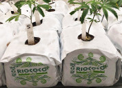 Industrial hemp growing solutions for cloning