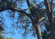 Excellent tree service by connor tree service
