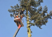 Tree maintenance under the best tree care company