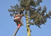 Tree removal call connor tree service mt pleasant