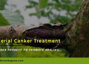 Bacterial canker treatment-save your trees from bl