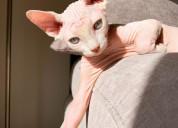 Spynx cats -washington d.c