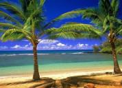 Palm tree mall