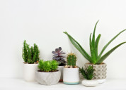 Find the cheap houseplants for sale online
