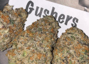 Gushers strain review